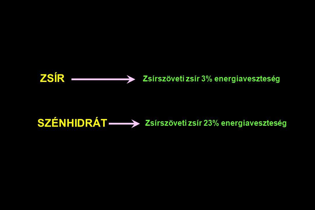 ZSÍR SZÉNHIDRÁT Zsírszöveti zsír 3% energiaveszteség