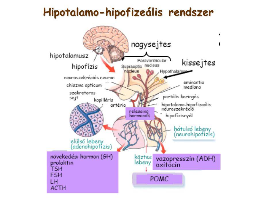 Hipotalamo-hipofizeális rendszer