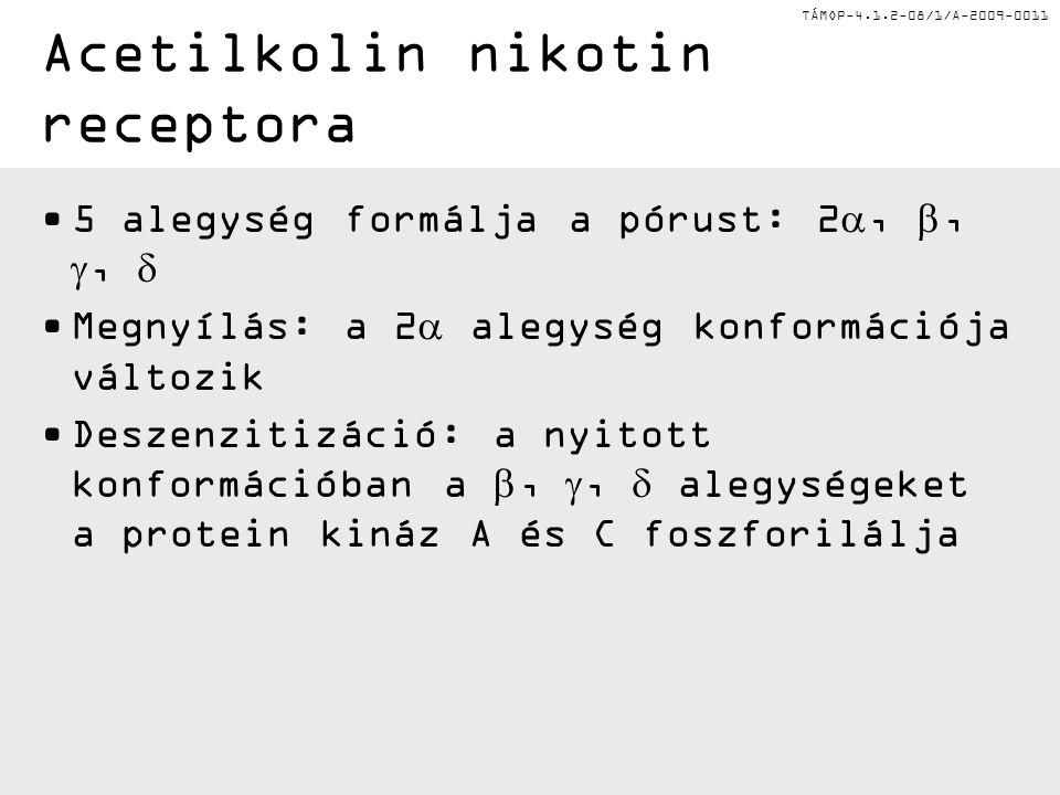 Acetilkolin nikotin receptora
