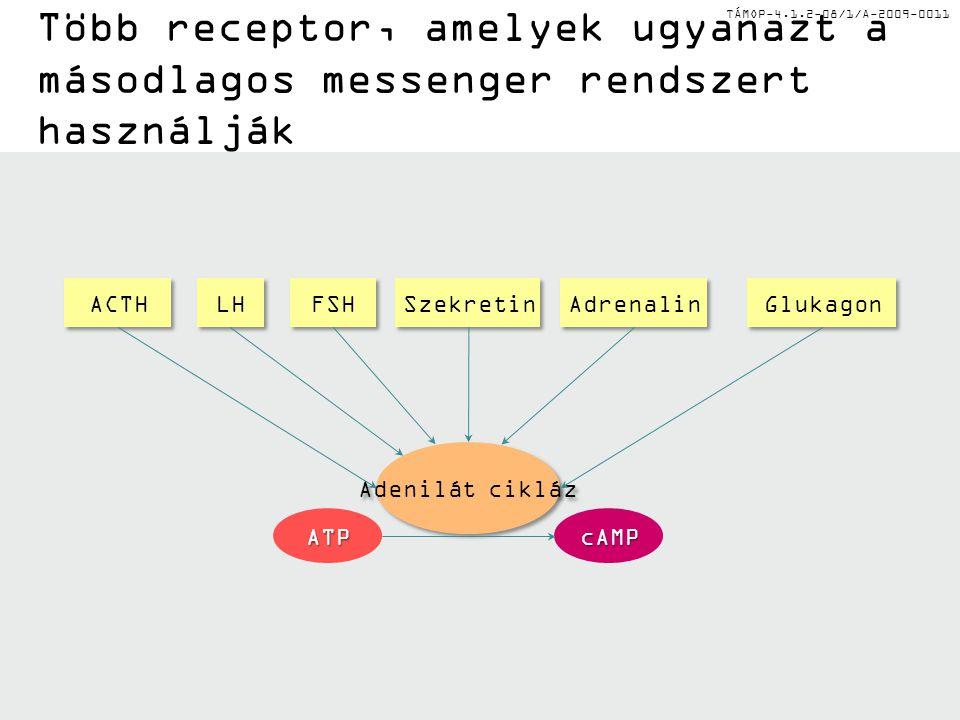 Több receptor, amelyek ugyanazt a másodlagos messenger rendszert használják