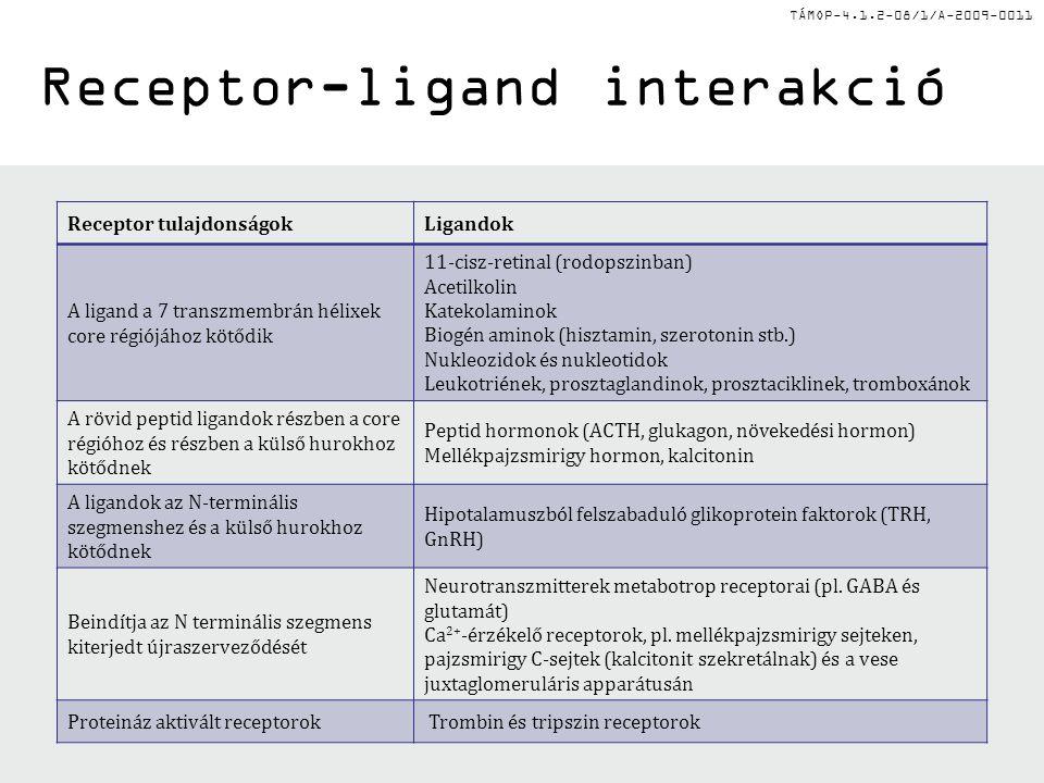 Receptor-ligand interakció