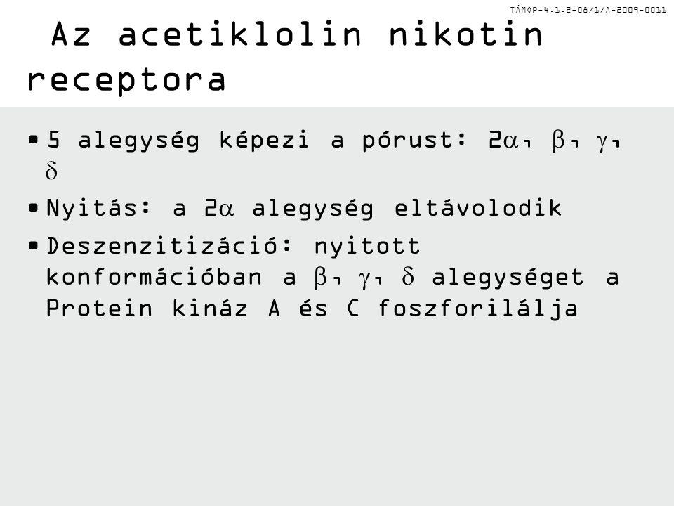 Az acetiklolin nikotin receptora