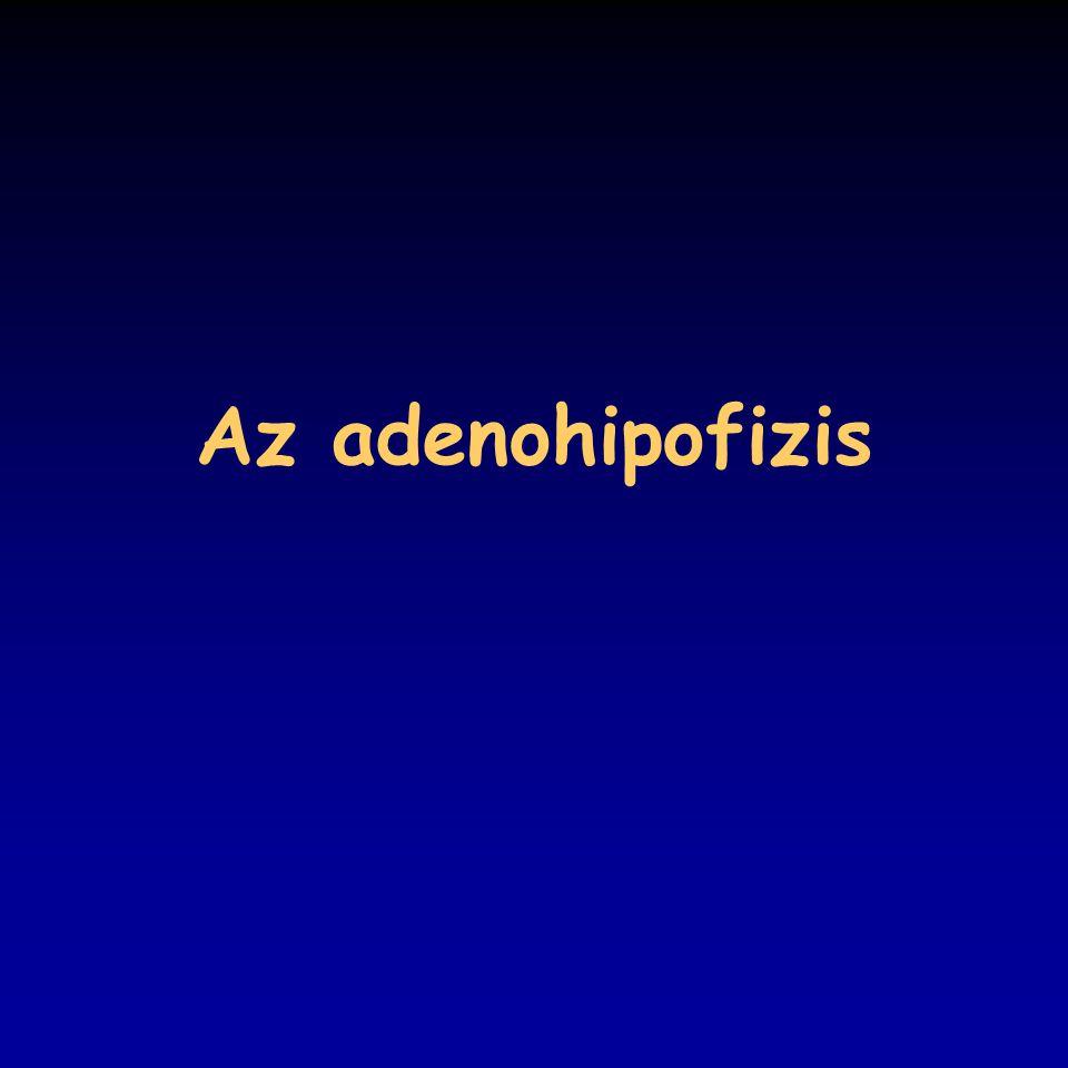 Az adenohipofizis