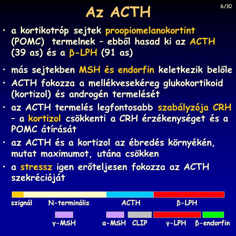 Az ACTH 6/10. a kortikotróp sejtek proopiomelanokortint (POMC) termelnek – ebből hasad ki az ACTH (39 as) és a β-LPH (91 as)
