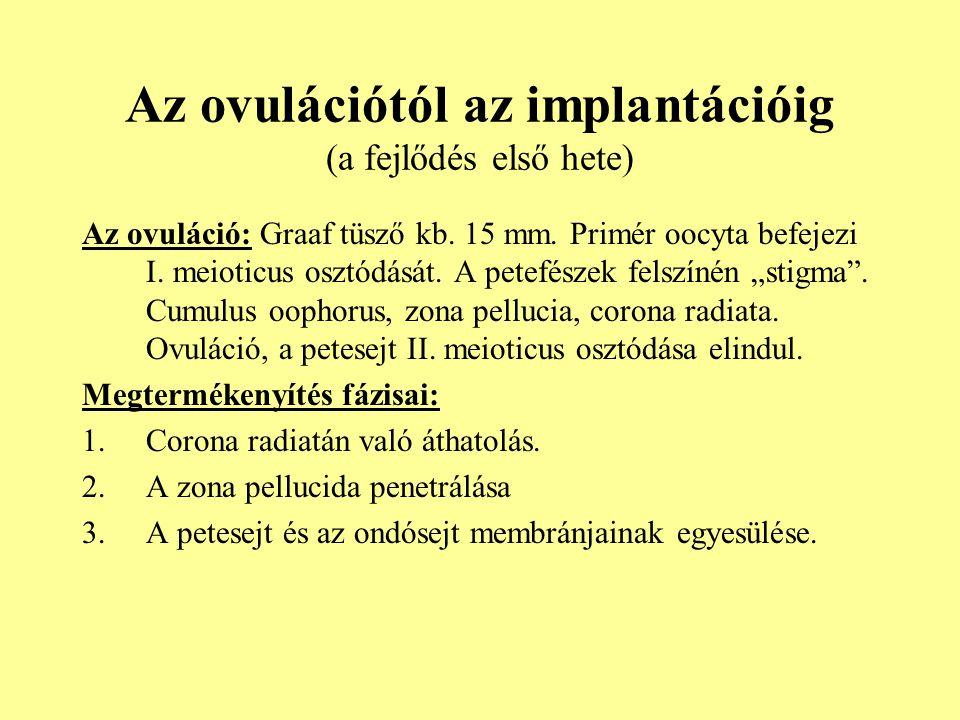Az ovulációtól az implantációig (a fejlődés első hete)