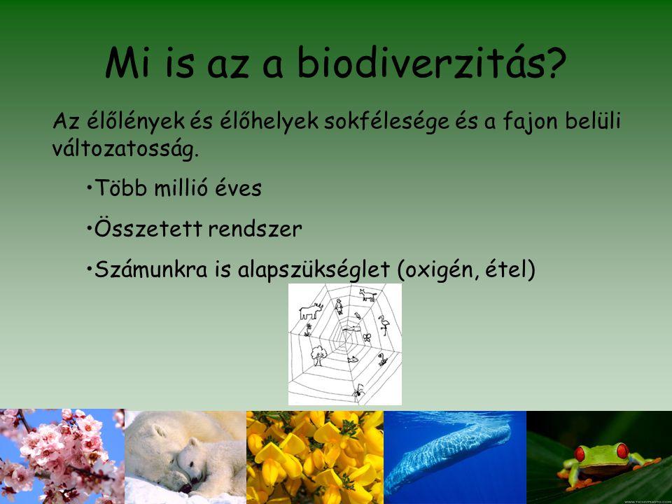 Mi is az a biodiverzitás