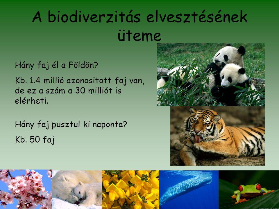 A biodiverzitás elvesztésének üteme