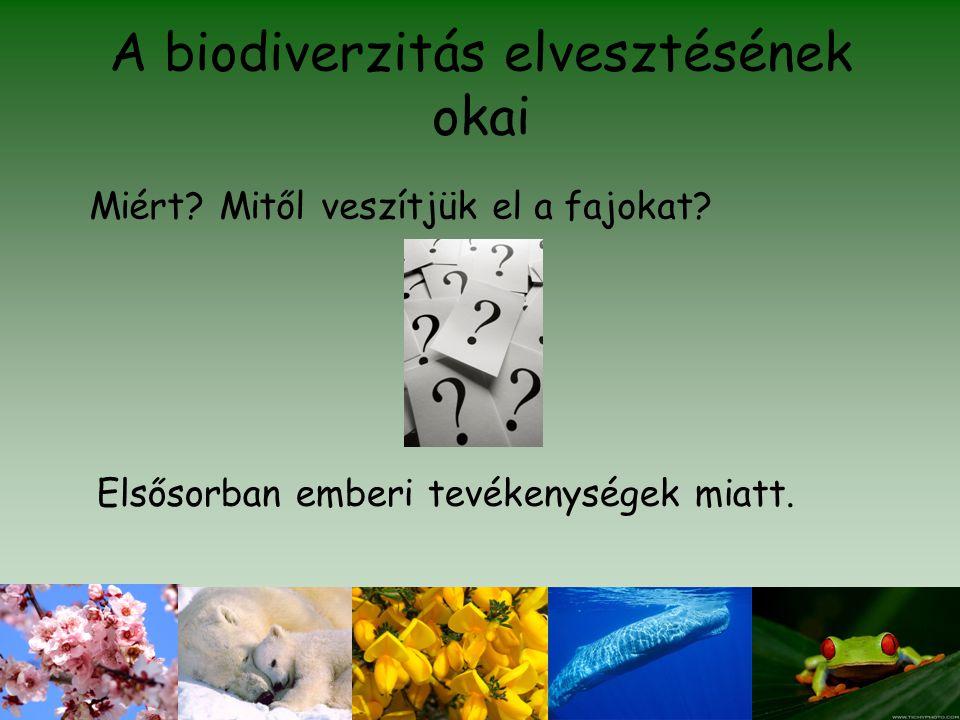 A biodiverzitás elvesztésének okai