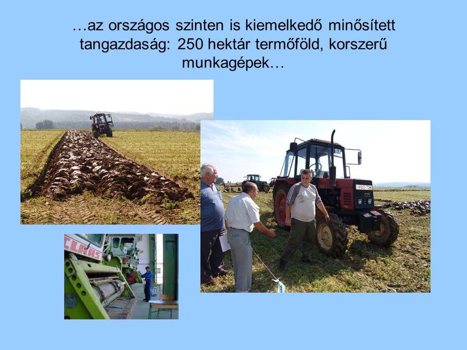 …az országos szinten is kiemelkedő minősített tangazdaság: 250 hektár termőföld, korszerű munkagépek…