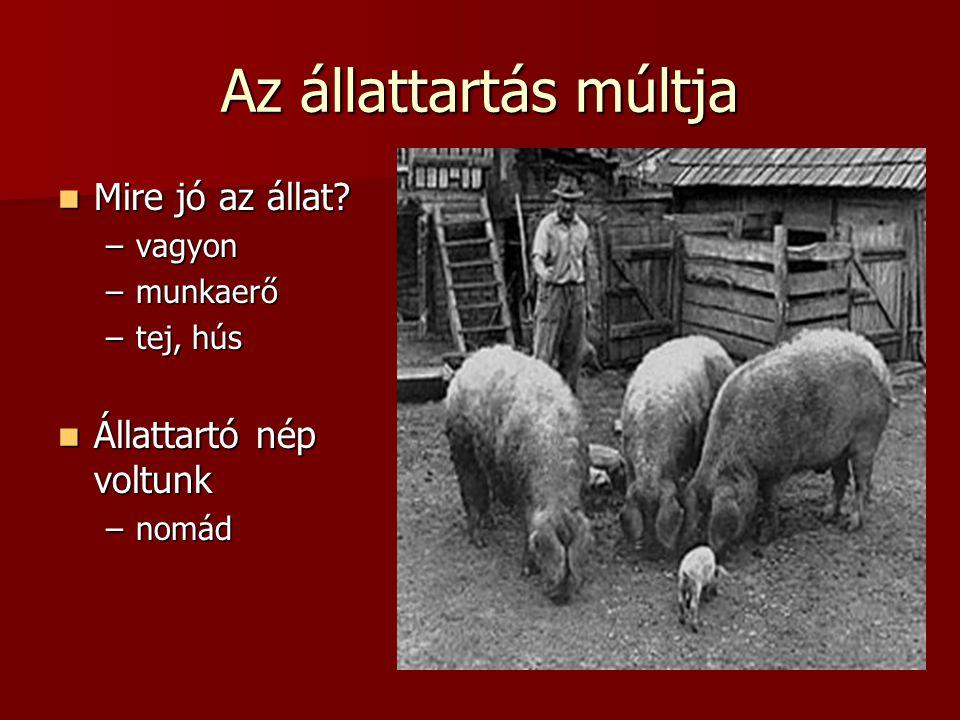 Az állattartás múltja Mire jó az állat Állattartó nép voltunk vagyon