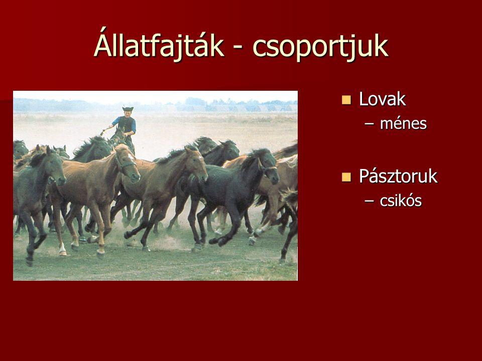 Állatfajták - csoportjuk