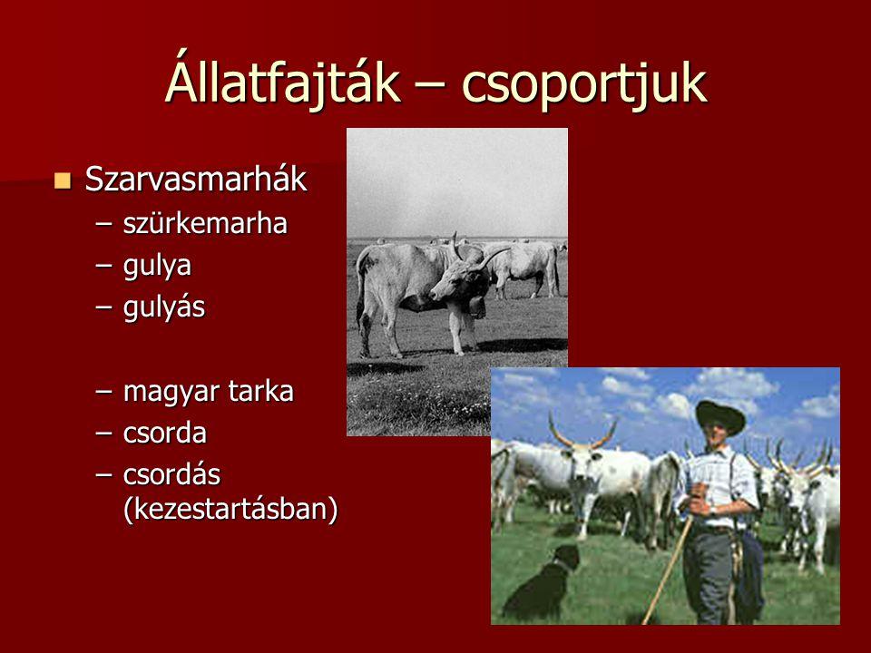 Állatfajták – csoportjuk