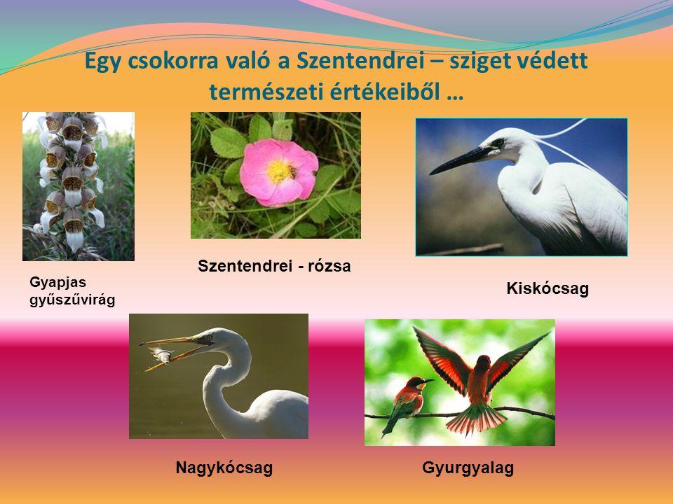 Egy csokorra való a Szentendrei – sziget védett természeti értékeiből …