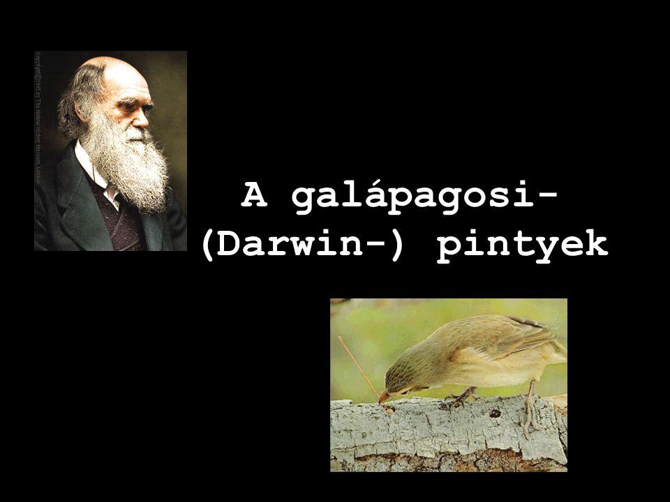 A galápagosi- (Darwin-) pintyek