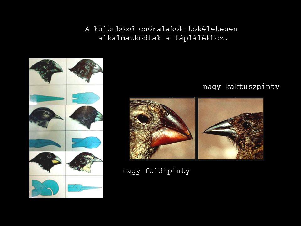 A különböző csőralakok tökéletesen alkalmazkodtak a táplálékhoz.