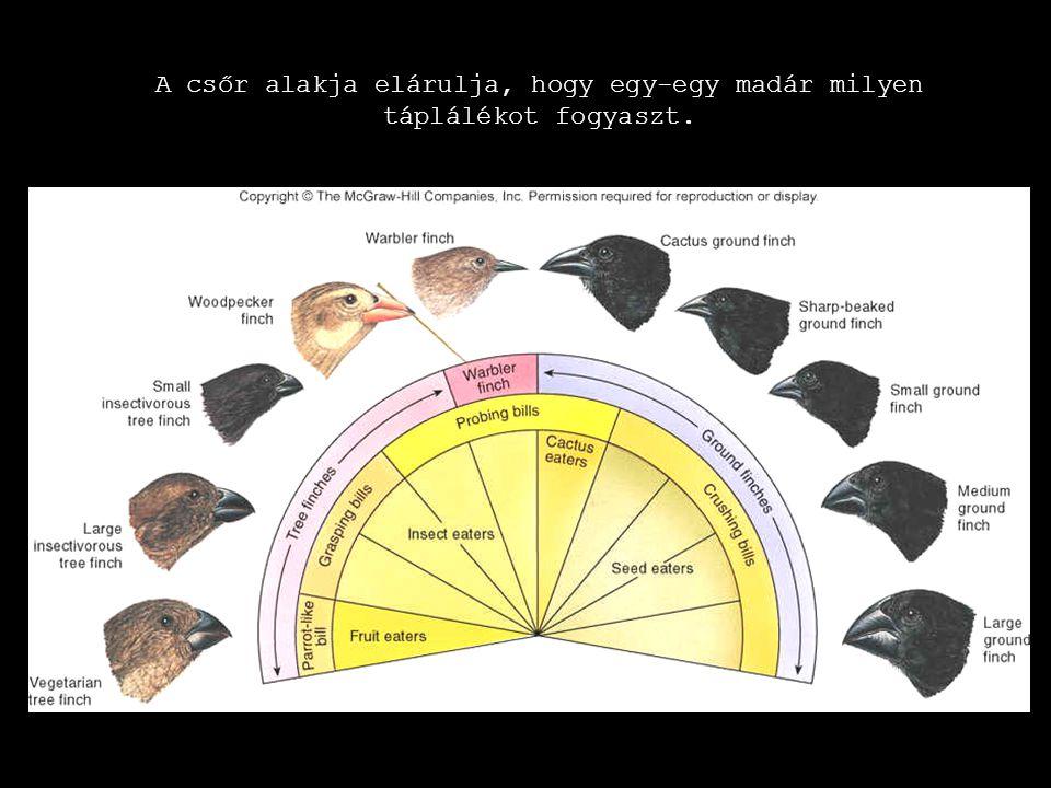 A csőr alakja elárulja, hogy egy-egy madár milyen