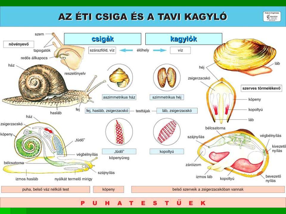 csigák kagylók