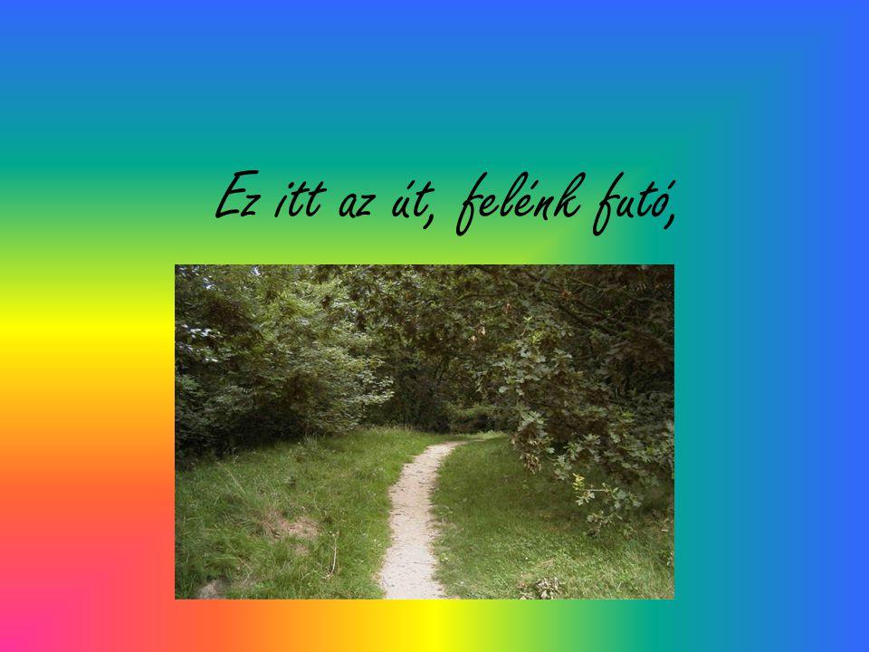 Ez itt az út, felénk futó,