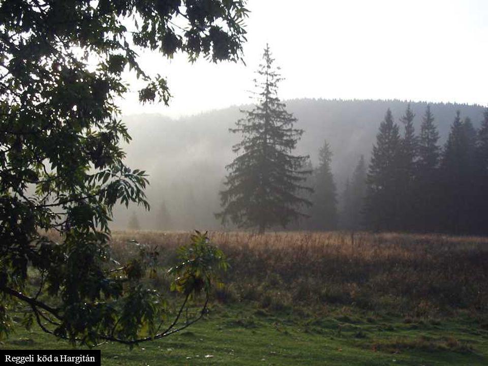 Reggeli köd a Hargitán