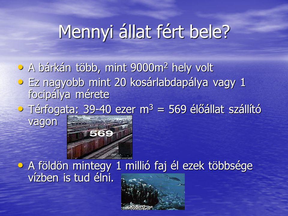 Mennyi állat fért bele A bárkán több, mint 9000m2 hely volt