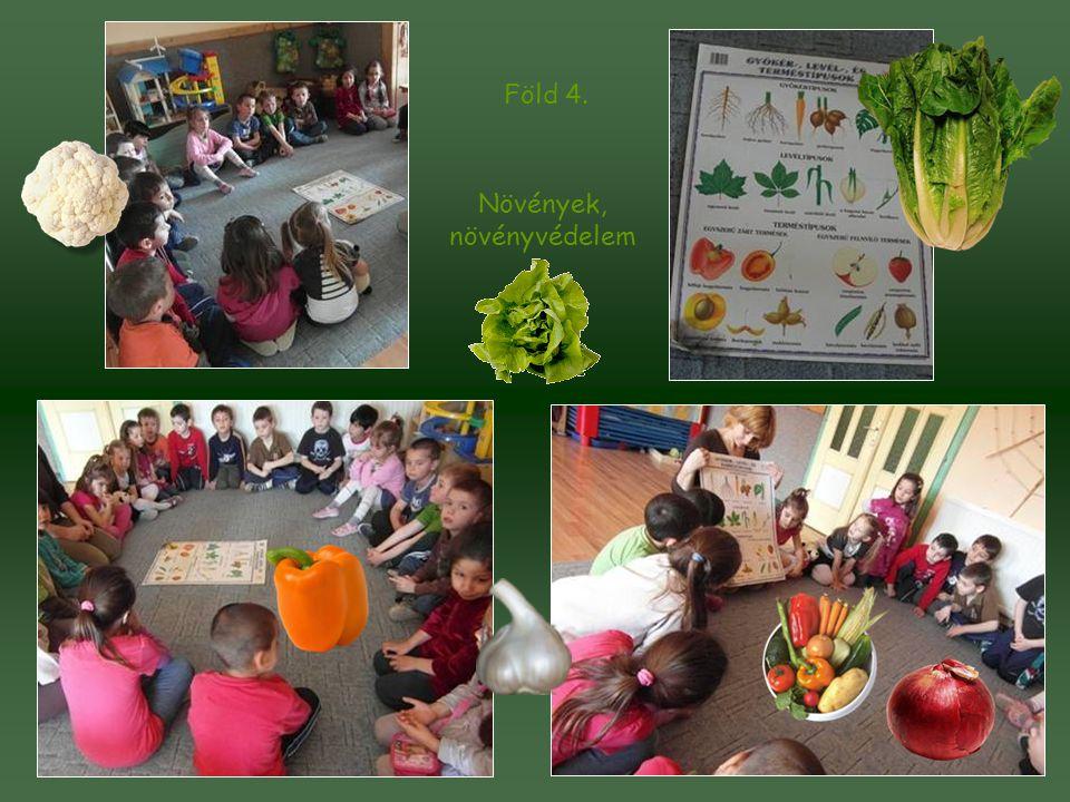 Növények, növényvédelem