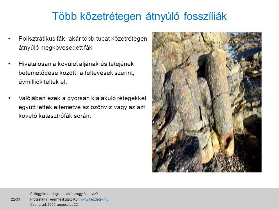 Több kőzetrétegen átnyúló fosszíliák