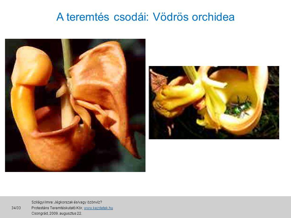 A teremtés csodái: Vödrös orchidea