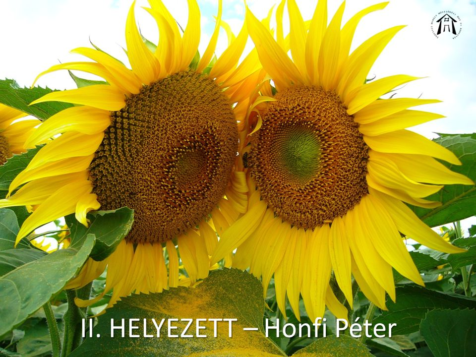 II. HELYEZETT – Honfi Péter