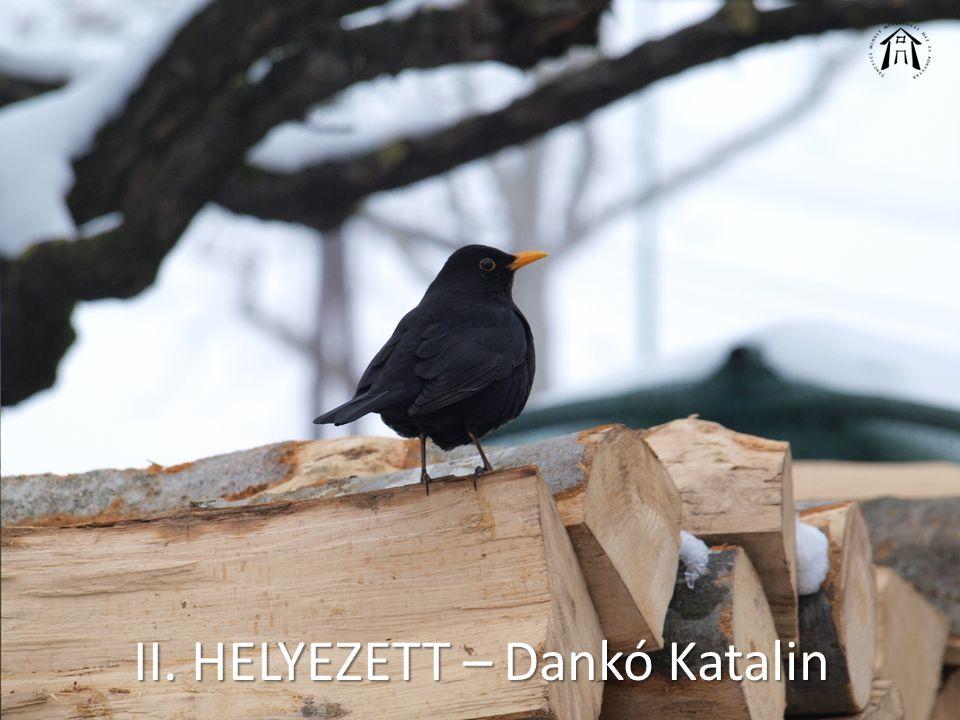 II. HELYEZETT – Dankó Katalin