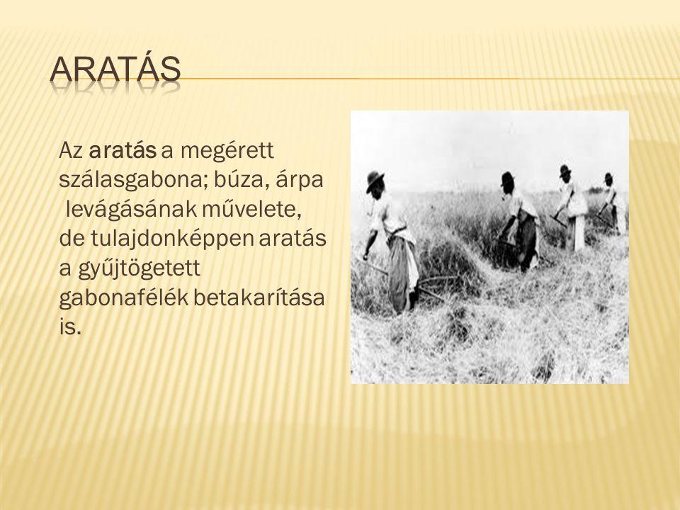 Aratás Az aratás a megérett szálasgabona; búza, árpa levágásának művelete, de tulajdonképpen aratás a gyűjtögetett gabonafélék betakarítása is.