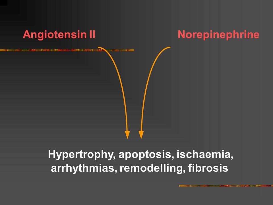 Angiotensin II Norepinephrine Hypertrophy, apoptosis, ischaemia, arrhythmias, remodelling, fibrosis