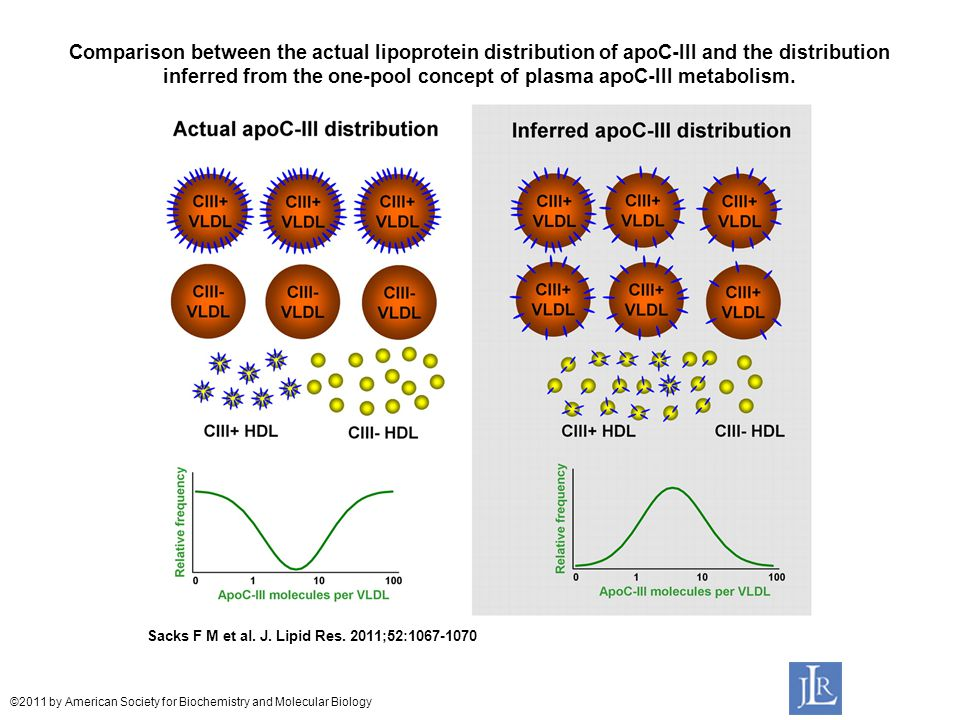 Comparison between the actual lipoprotein distribution of apoC-III and the distribution inferred from the one-pool concept of plasma apoC-III metabolism.