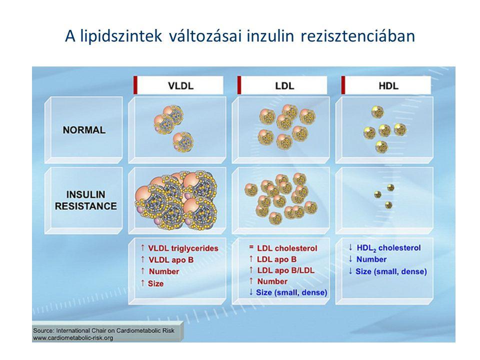 A lipidszintek változásai inzulin rezisztenciában
