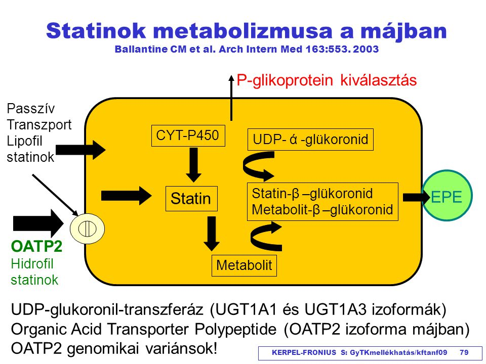 Statinok metabolizmusa a májban Ballantine CM et al
