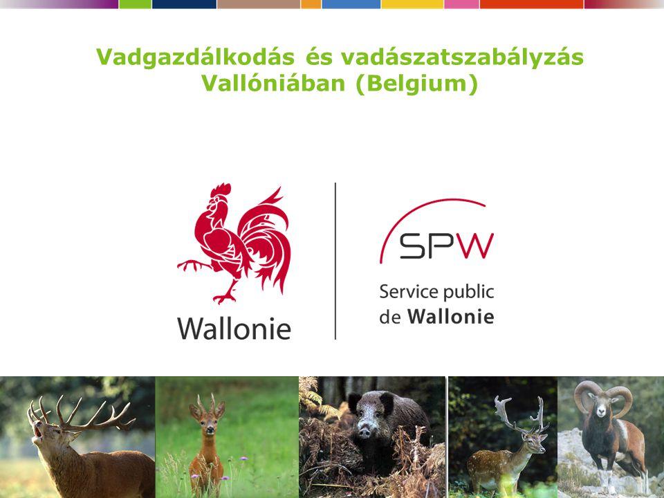 Vadgazdálkodás és vadászatszabályzás Vallóniában (Belgium)