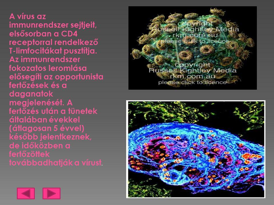 A vírus az immunrendszer sejtjeit, elsősorban a CD4 receptorral rendelkező