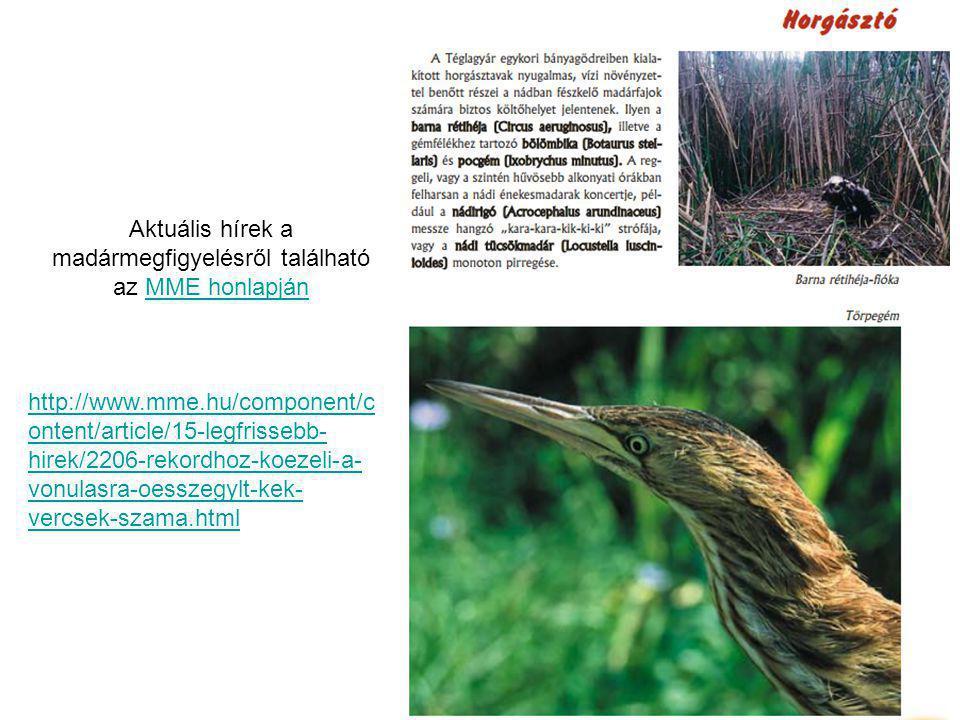 Aktuális hírek a madármegfigyelésről található az MME honlapján