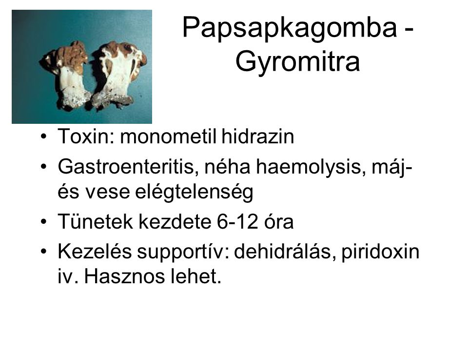 Papsapkagomba - Gyromitra