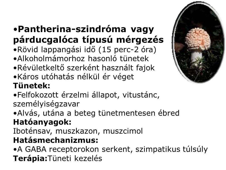 Pantherina-szindróma vagy párducgalóca típusú mérgezés