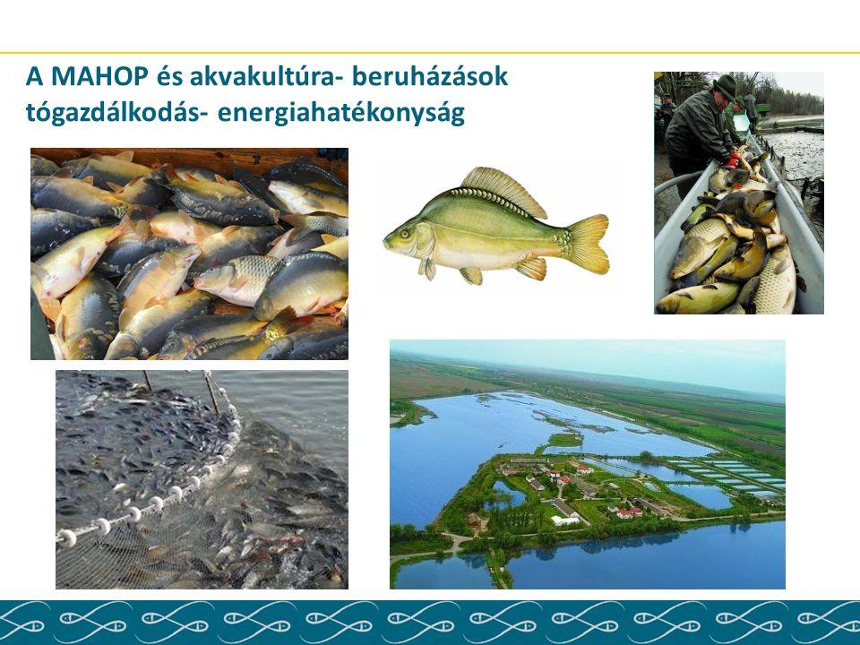 A MAHOP és akvakultúra- beruházások tógazdálkodás- energiahatékonyság