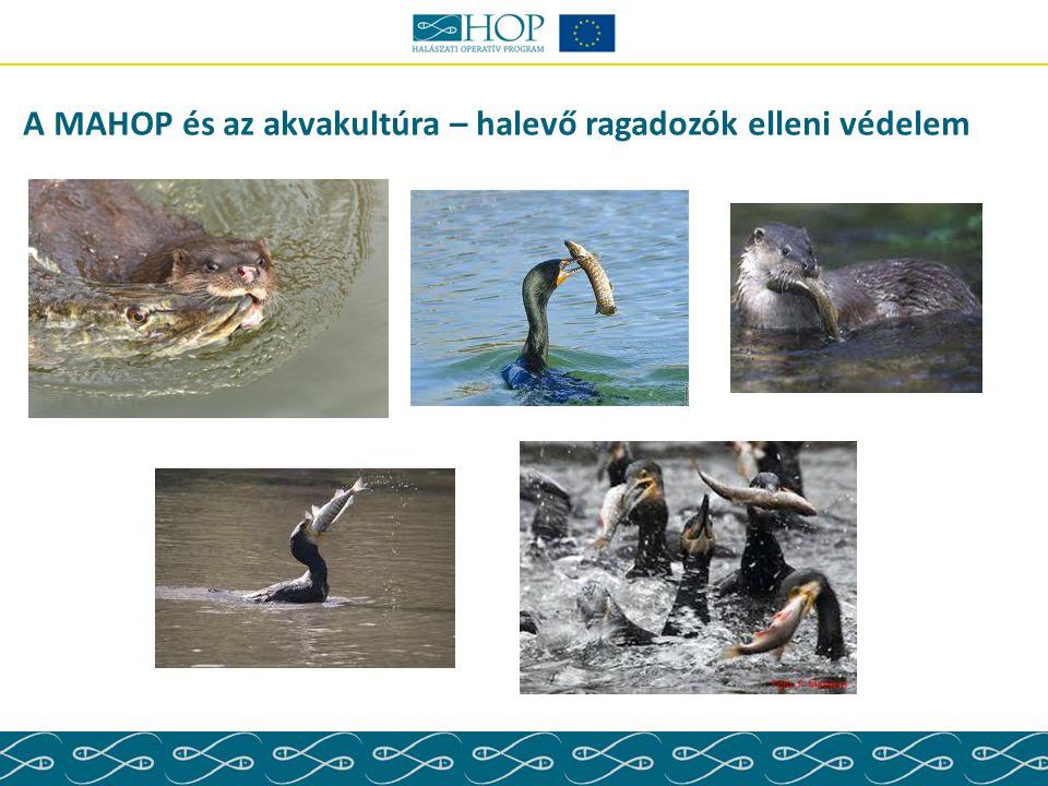 A MAHOP és az akvakultúra – halevő ragadozók elleni védelem