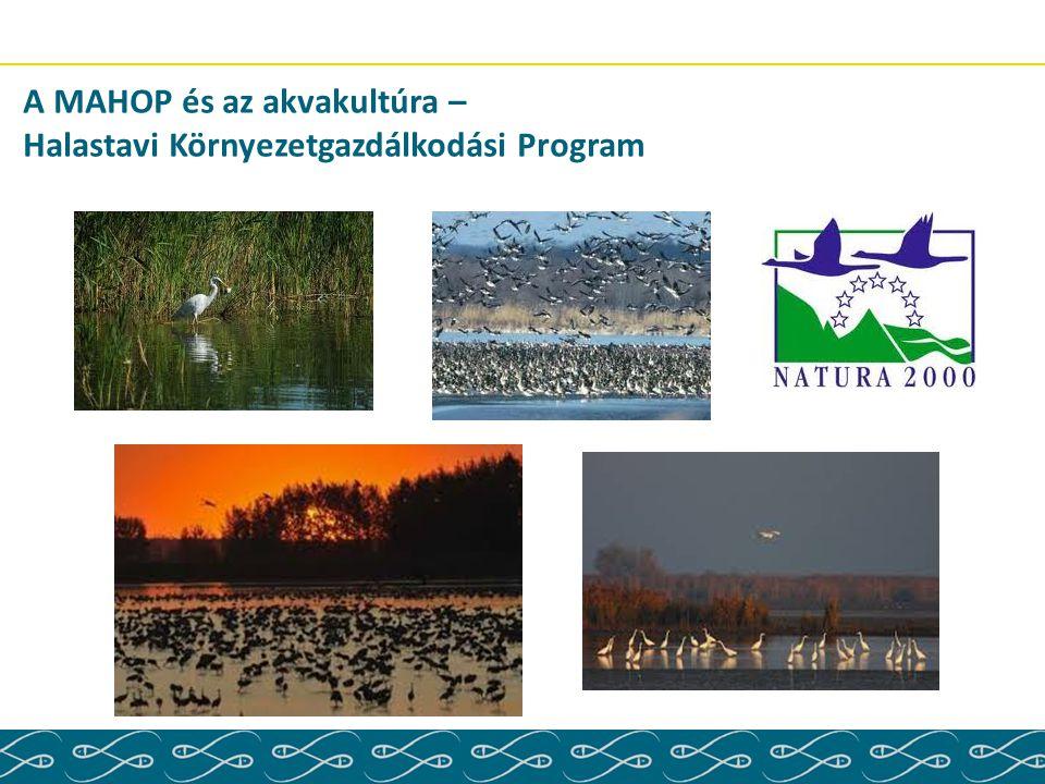 A MAHOP és az akvakultúra – Halastavi Környezetgazdálkodási Program