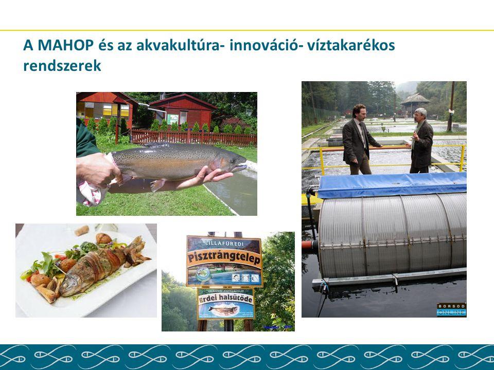 A MAHOP és az akvakultúra- innováció- víztakarékos rendszerek