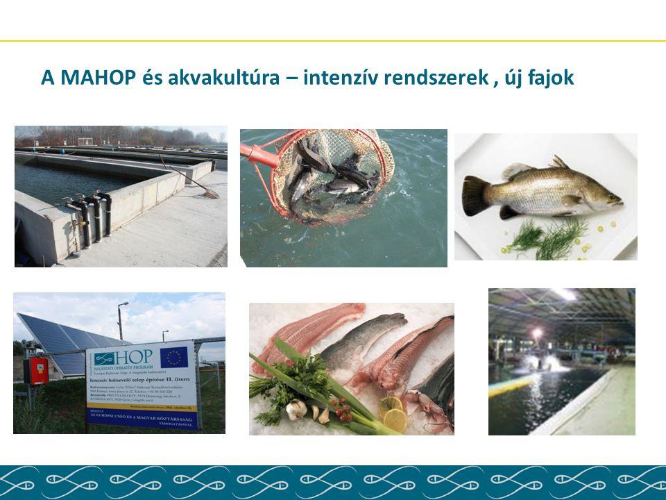A MAHOP és akvakultúra – intenzív rendszerek , új fajok
