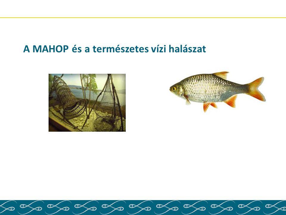 A MAHOP és a természetes vízi halászat
