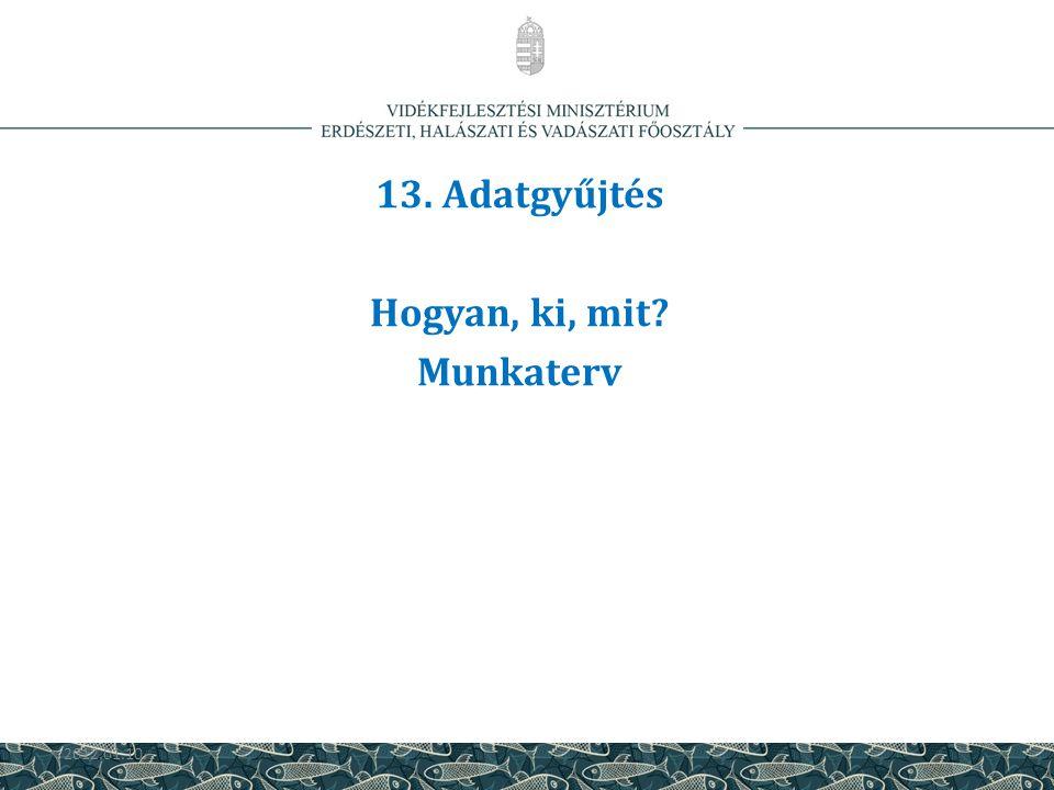 13. Adatgyűjtés Hogyan, ki, mit Munkaterv