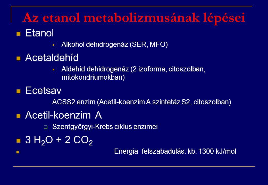 Az etanol metabolizmusának lépései