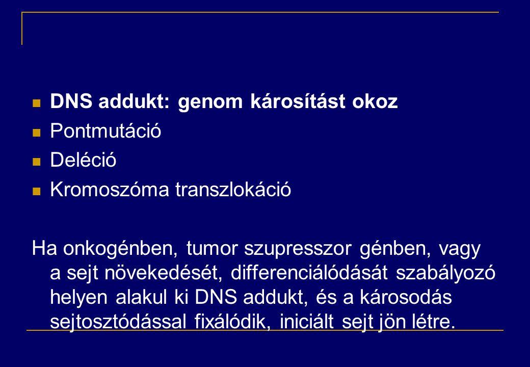 DNS addukt: genom károsítást okoz