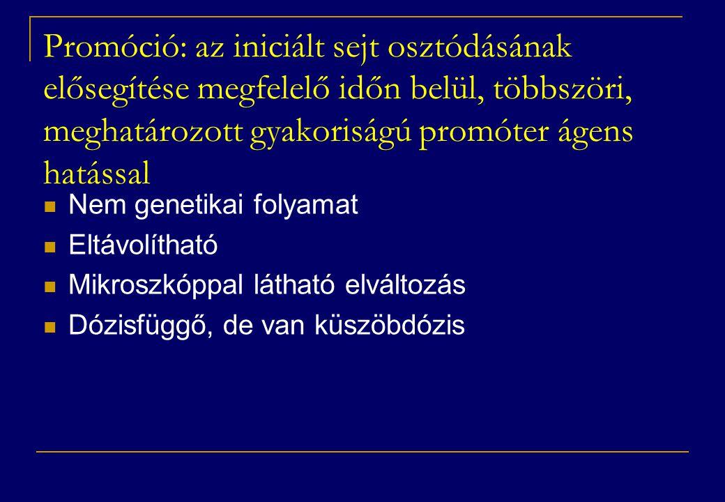Promóció: az iniciált sejt osztódásának elősegítése megfelelő időn belül, többszöri, meghatározott gyakoriságú promóter ágens hatással