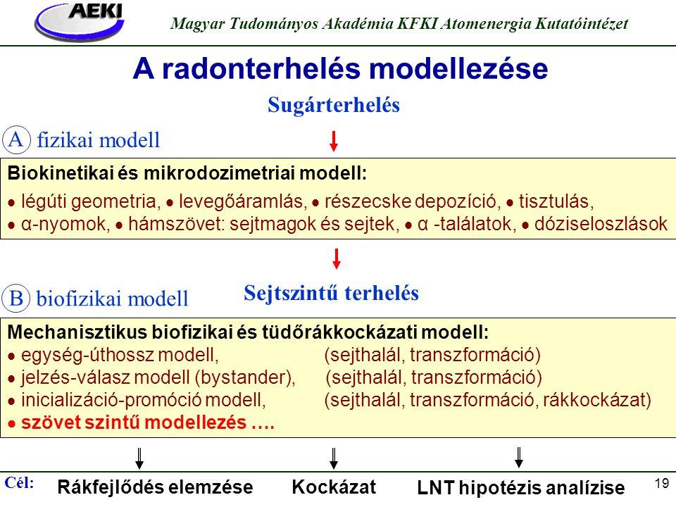 A radonterhelés modellezése LNT hipotézis analízise
